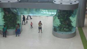 acquario del Sambil di Santo domingo
